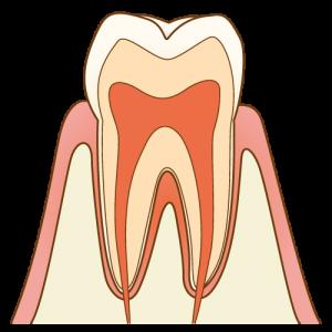健康な歯 co